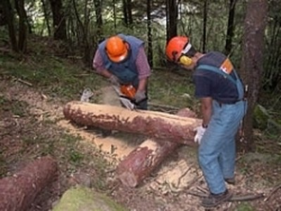 Il tribunale di Ragusa ha indicato la strada verso la stabilizzazione dei lavoratori forestali della Sicilia