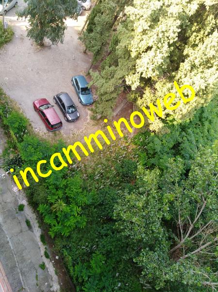 Patti: dalla «giungla» di via Gorizia proviene un odore nauseabondo...