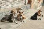 Gioiosa Marea: lotta al randagismo canino