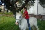 Piraino: un «pony giardiniere» nella scuola di Gliaca